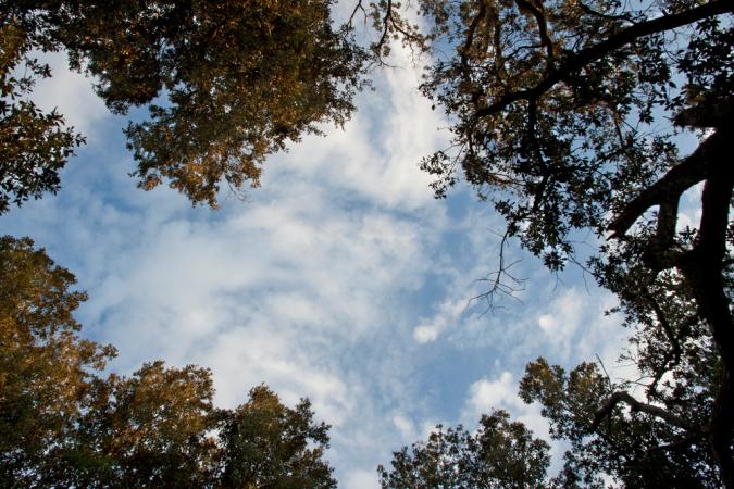 """Percorso nella Riserva Naturale """"Bosco delle Pianelle"""""""