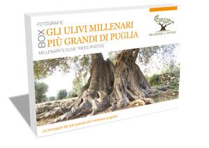 COFANETTO-ulivi-millenari