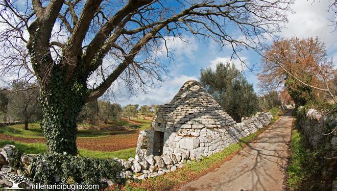 Escursione a Cisternino tra i tratturi e l'area collinare di